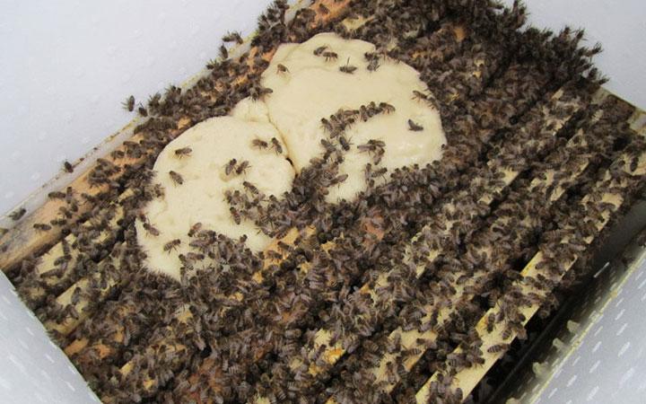 рецепт канди для подкормки пчел